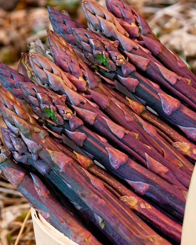 Asperges-Purple-Passion