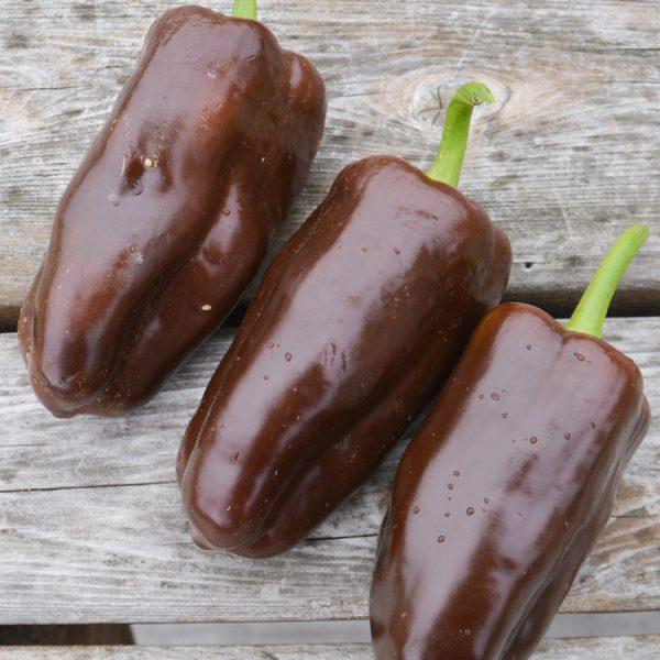 Poivron-Chocolat