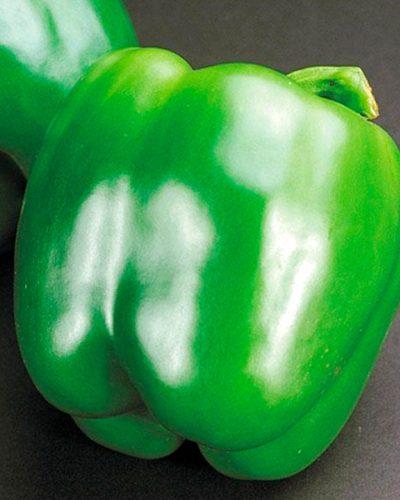 Poivron-california-wonder-vert