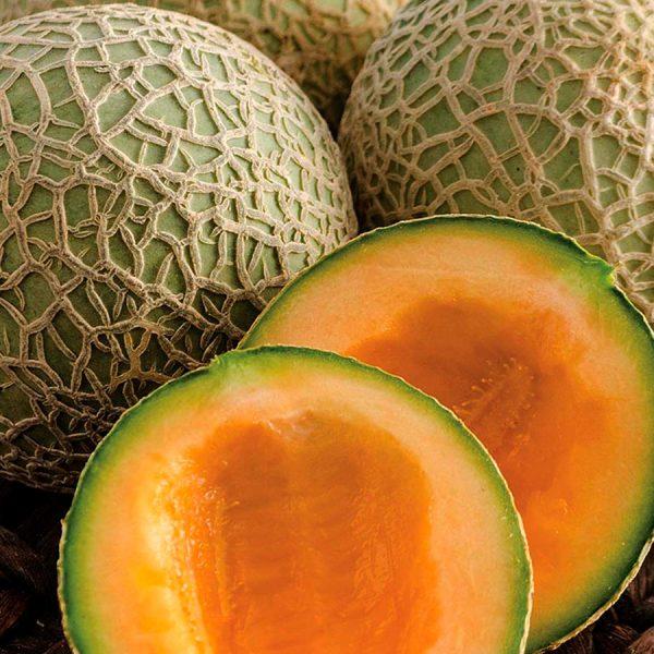 Sugar-Cube-Melon