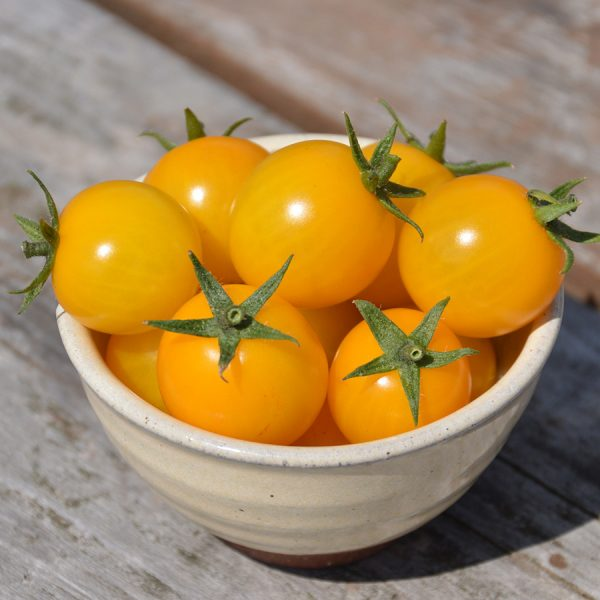 Tomate-Gold-Nugget