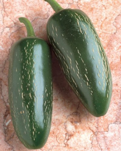 pimient-jalapeno-early-hot