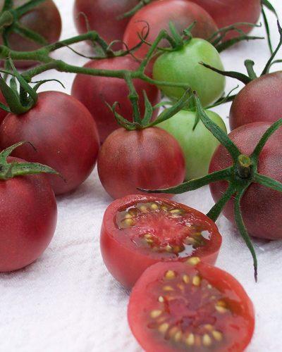 tomate-cerise-chocolate-cherry