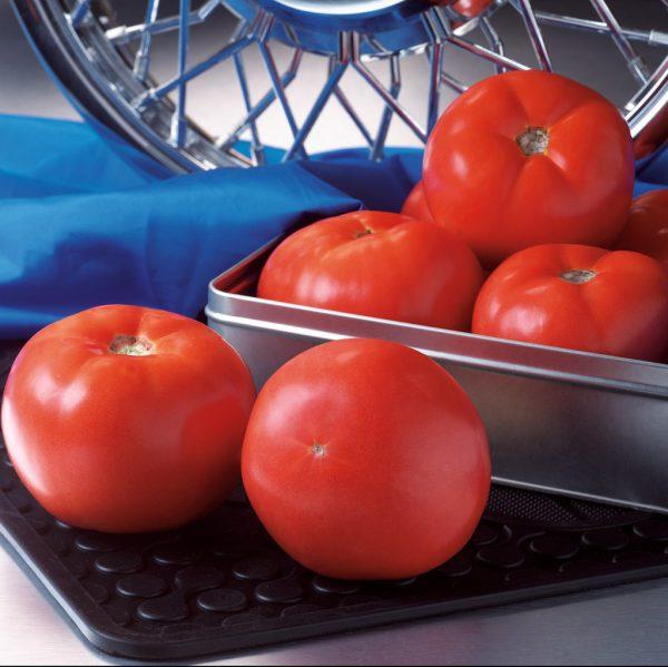tomate-hyb-rocky-top