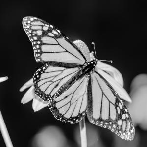 monarca-blog-png